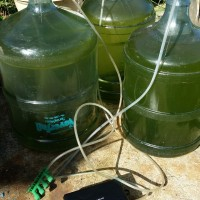 My DIY bioreactor for scrubbing CO2. #2
