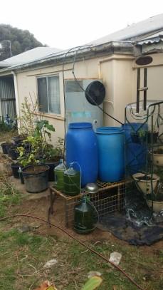 back garden 2015