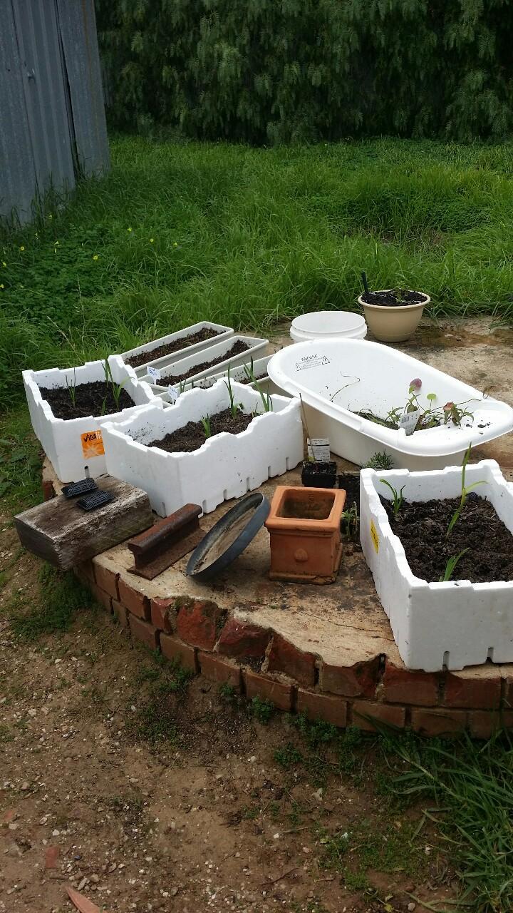 The first plantings at Ligaya Garden.
