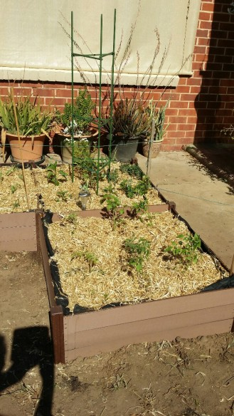 raised beds front garden 2015