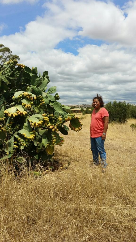 Jelina prickly pear