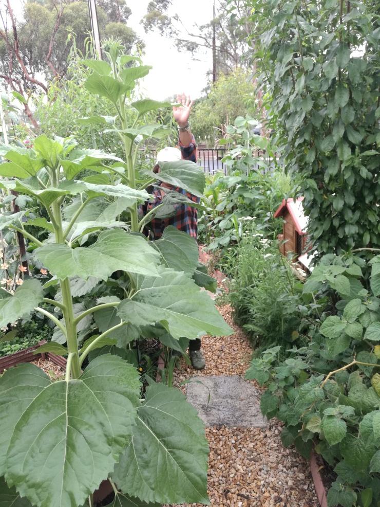 Our garden 02/04/17 16 months in