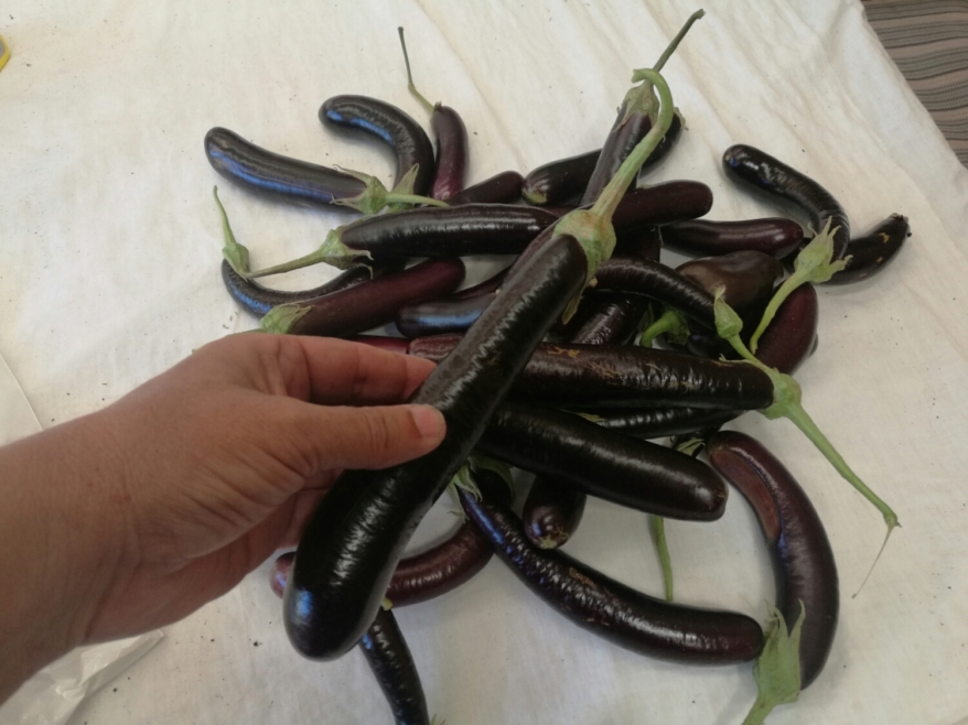 4 kg of eggplants from Dad