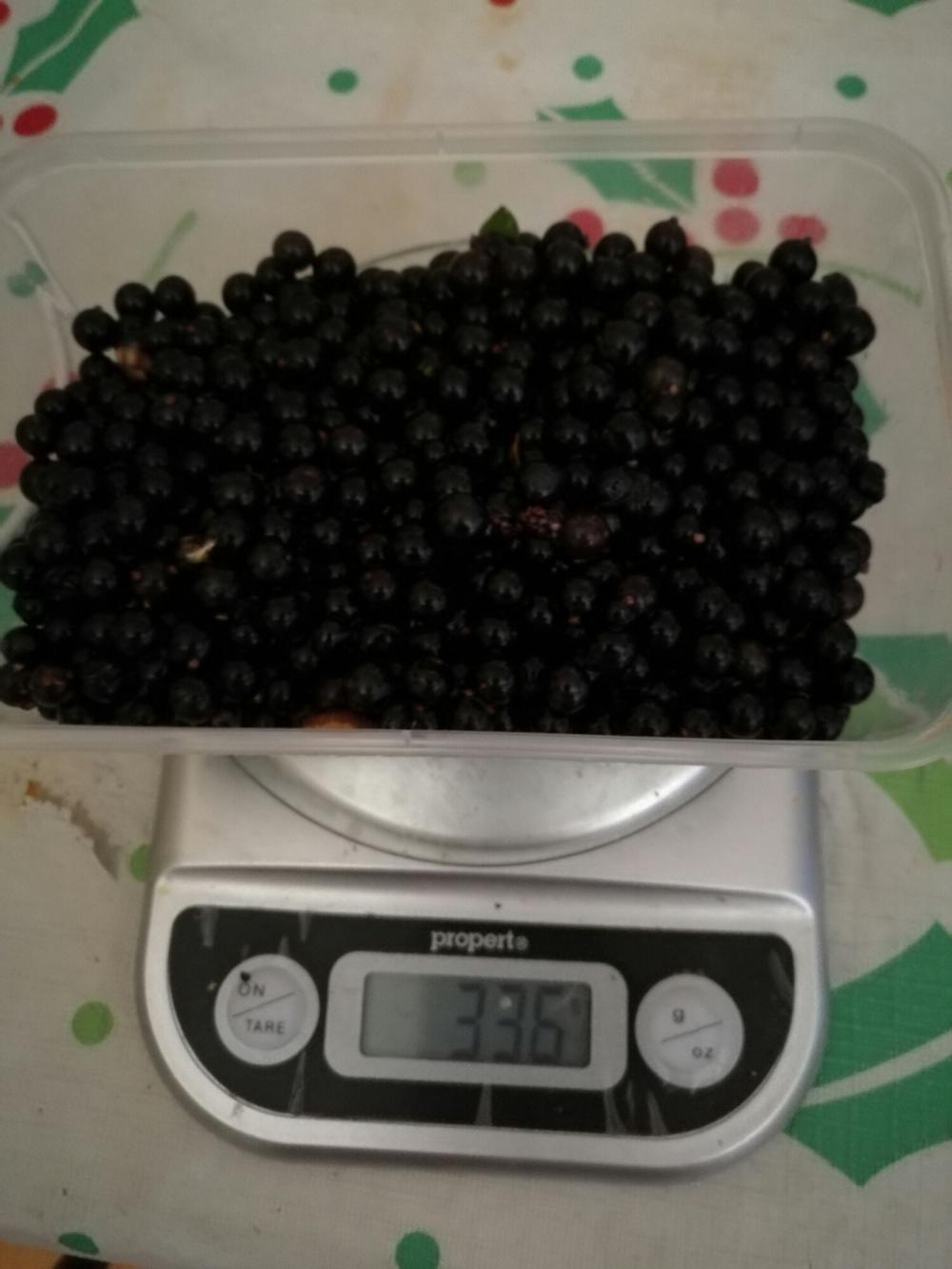 Solanum nigrum berries