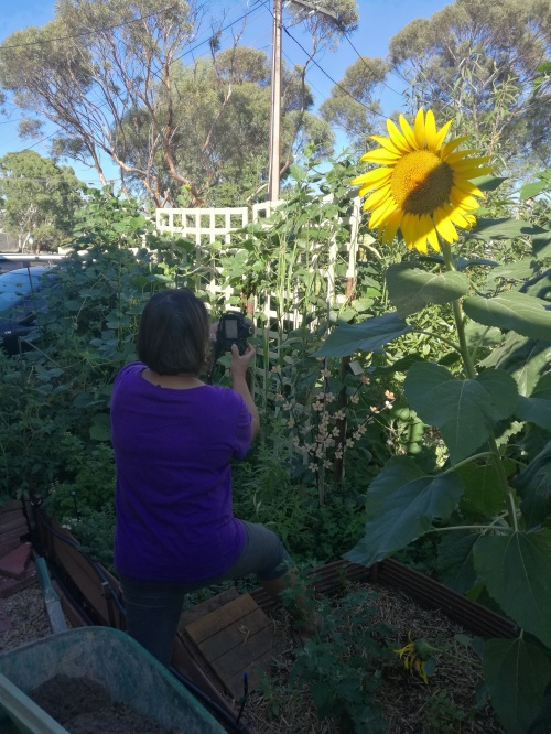 Jelina vs a really big sunflower