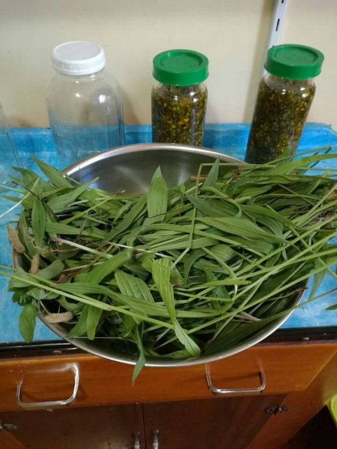 Gather your herbal material