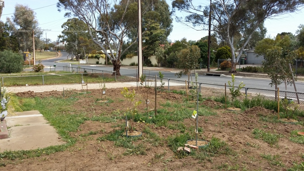 Trees all planted.