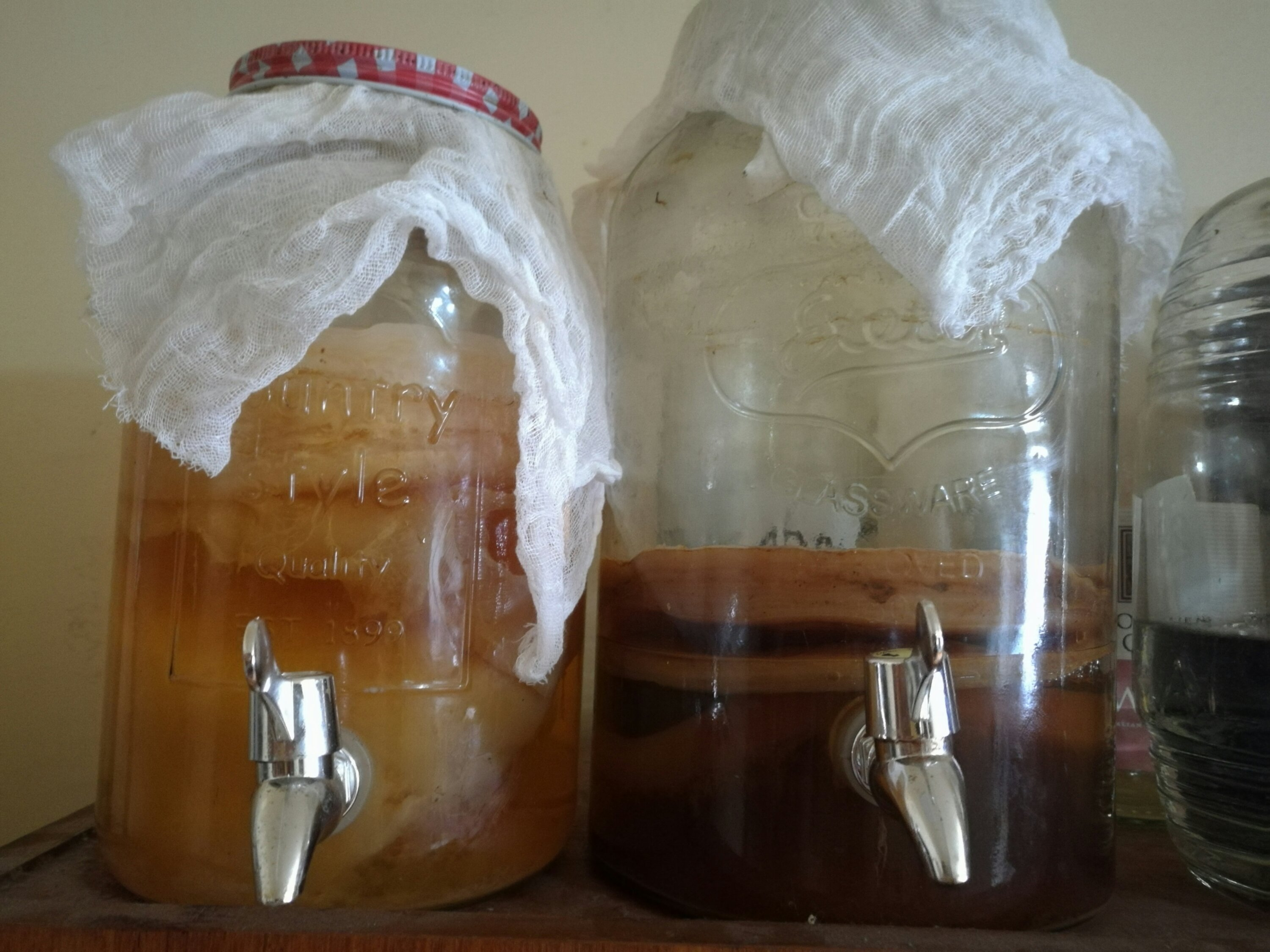 Apple cider vinegar and Kombucha