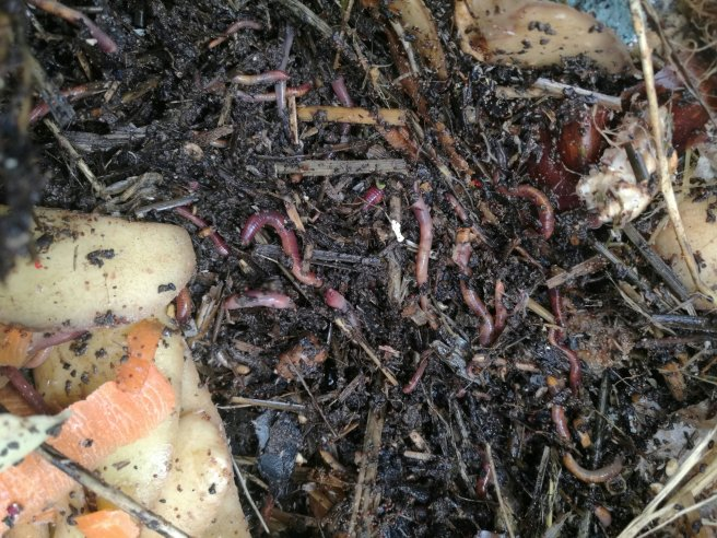 Worms have the joy of living in their food.