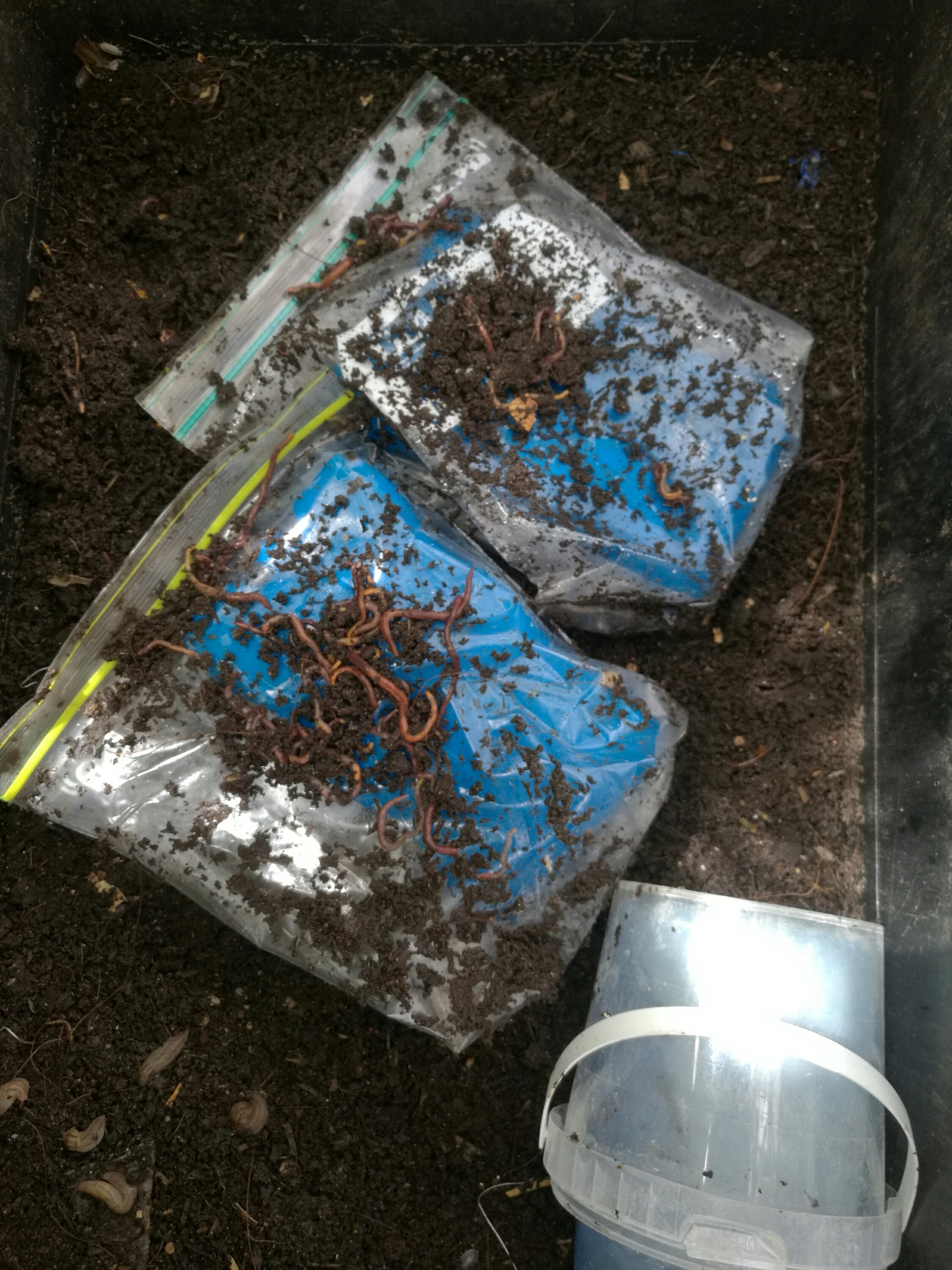 Ice packs to keep worms cool.