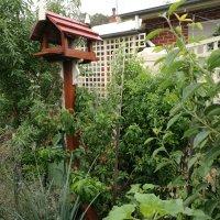 Ligaya Gardening Tips #9 the joys of perennials