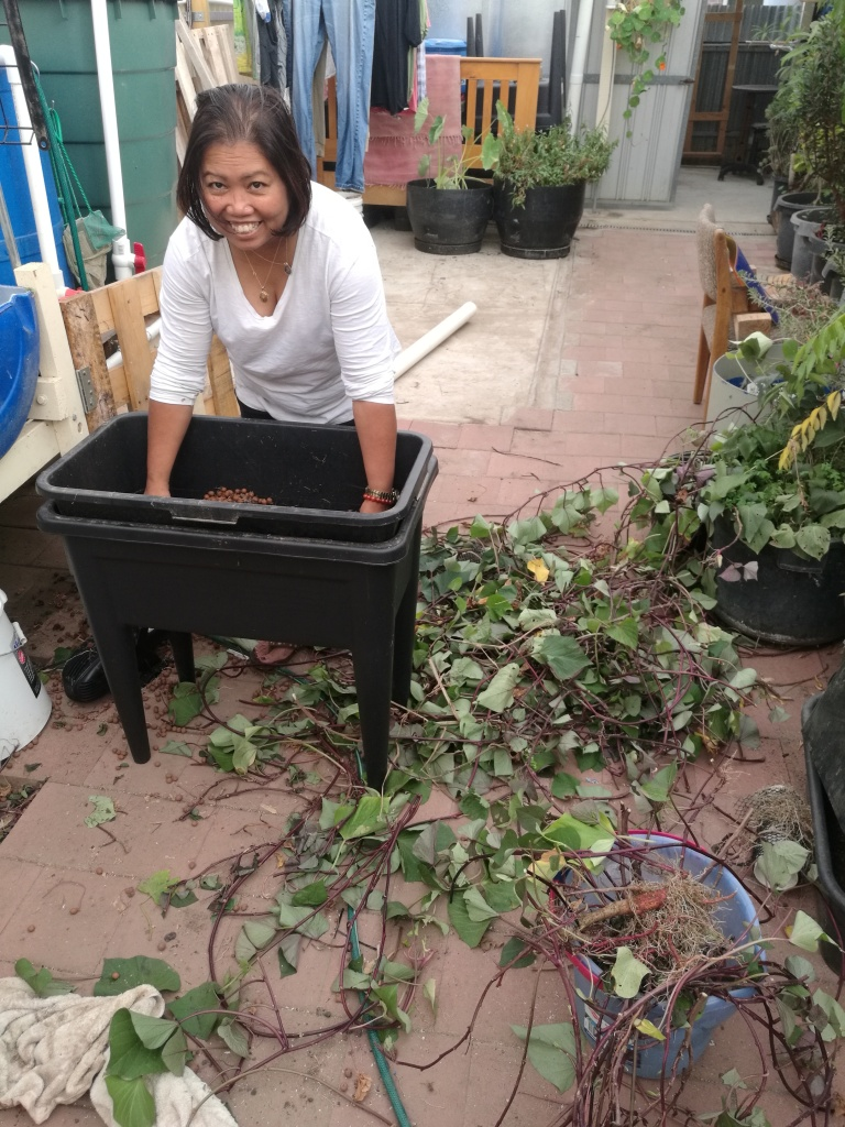 Jelina cleaning sweet potato beds