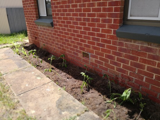 next door garden cooling shade
