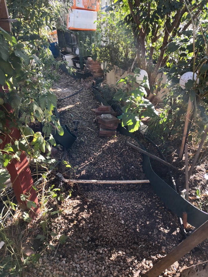 Lots of turmoil in the garden as we rejig the drip irrigation