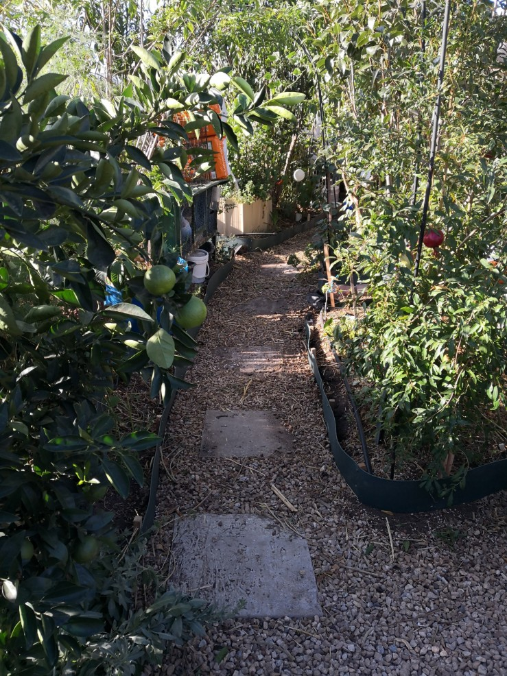 The newly edged path