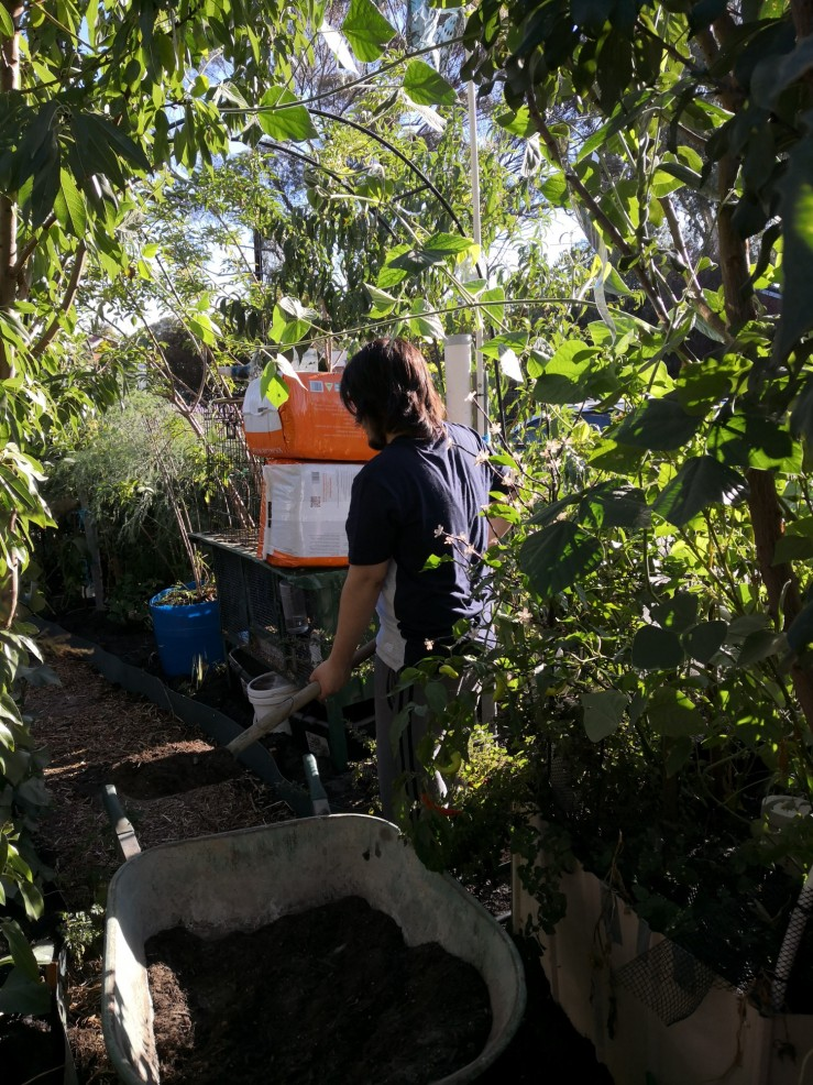 Marlon working on the garden