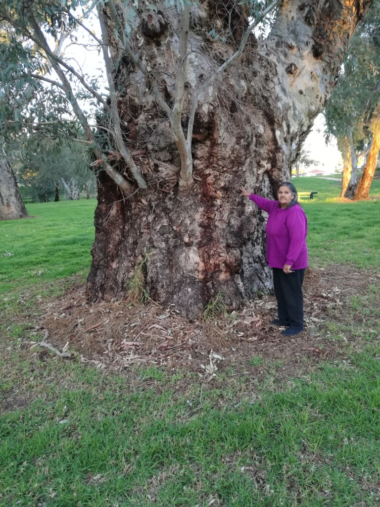 Aunty Ellen Trevorrow visiting a Red Gum by our river