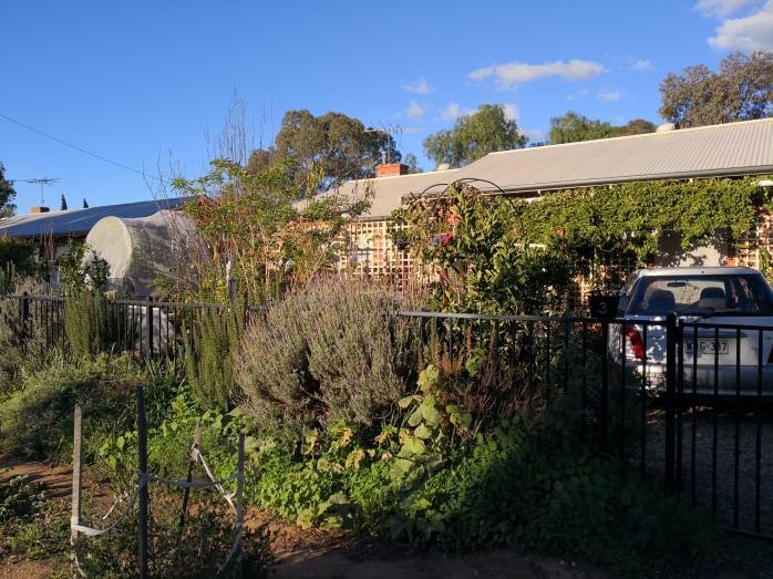 Empty winter garden after pruning