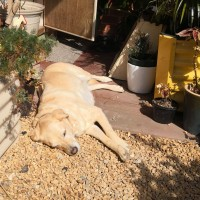 Ligaya Gardening Tips #8 Watering in Winter and Spring