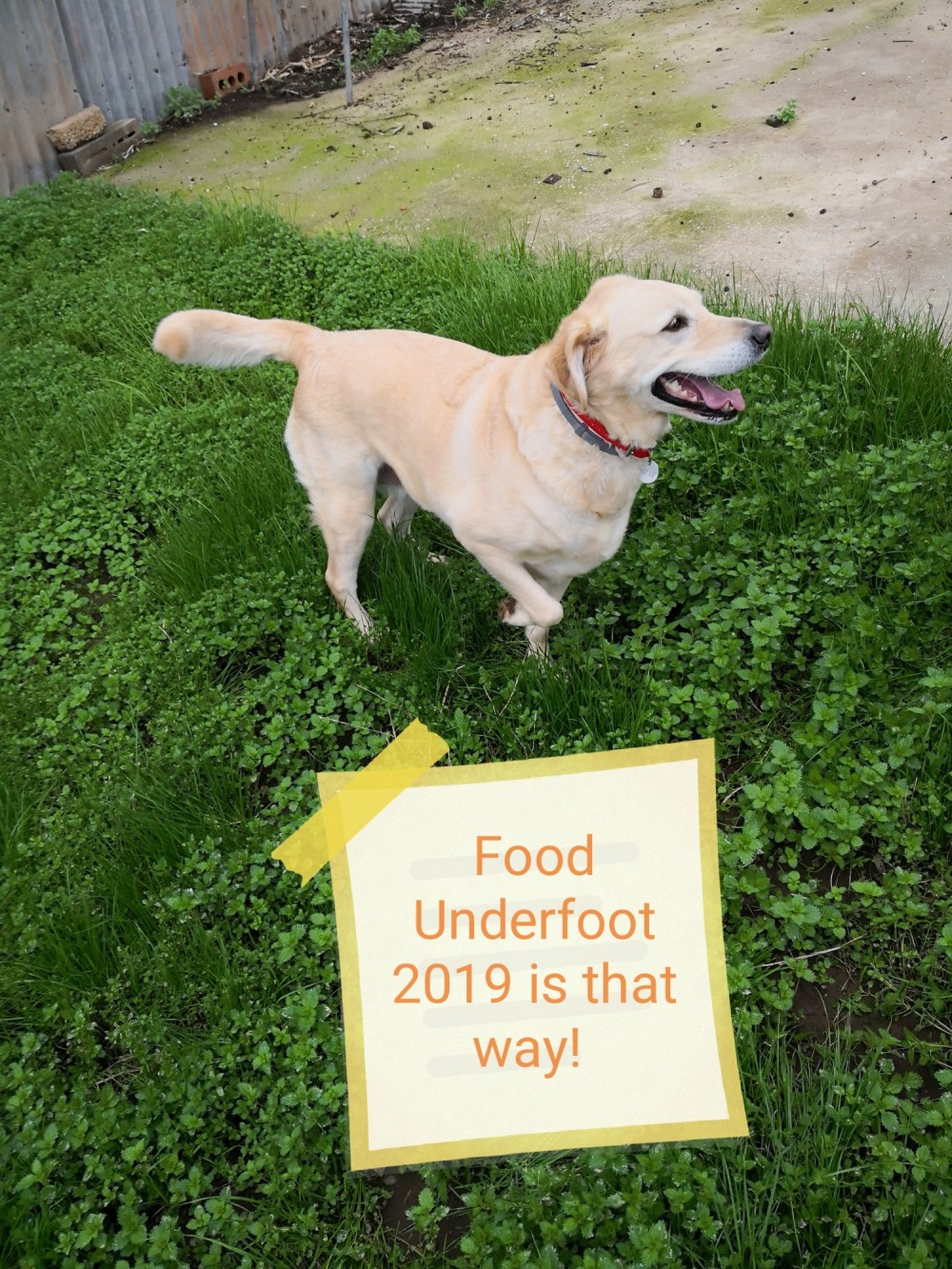 Food Underfoot 2019