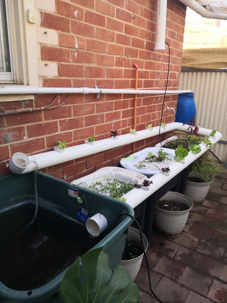Our new aquaponics section