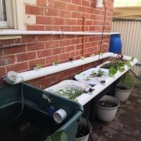 A new aquaponics system