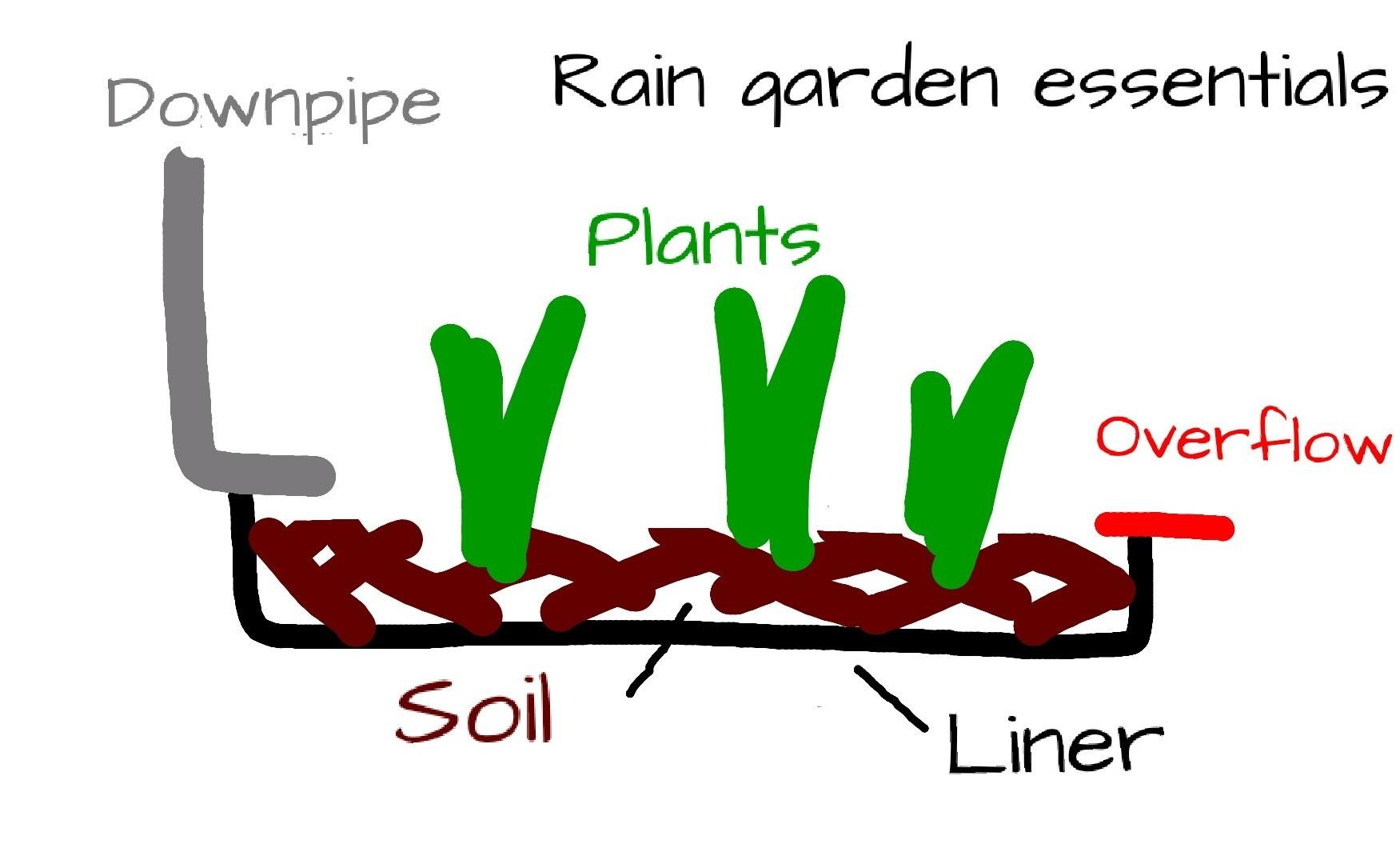 Essentials of a rain garden