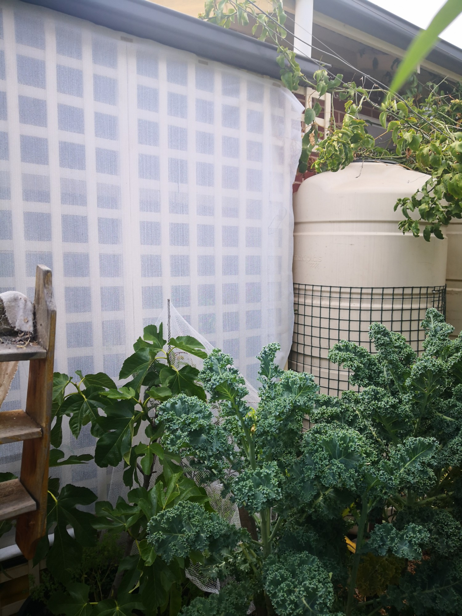 A double layer- plants and shade cloth. The rain tank acts as thermal mass.