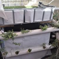 Aquaponics & hydroponics