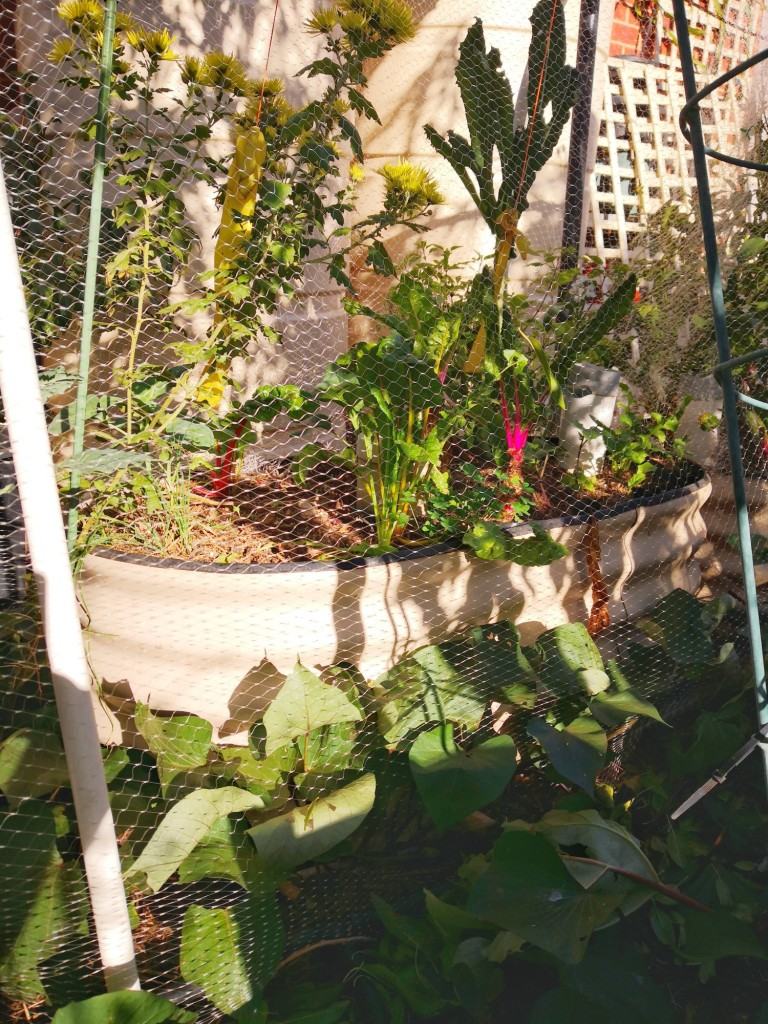 Raised beds can absorb heat or reflect it.