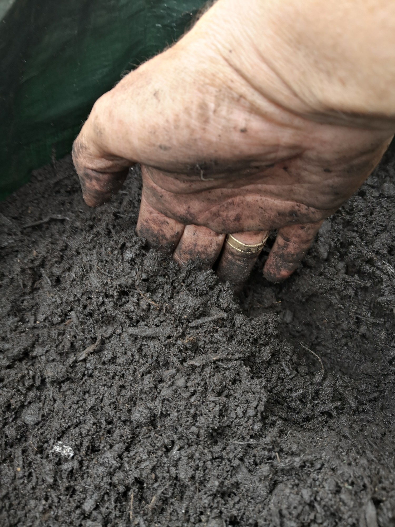 Cover the potatoes with 5-10 cm of compost.
