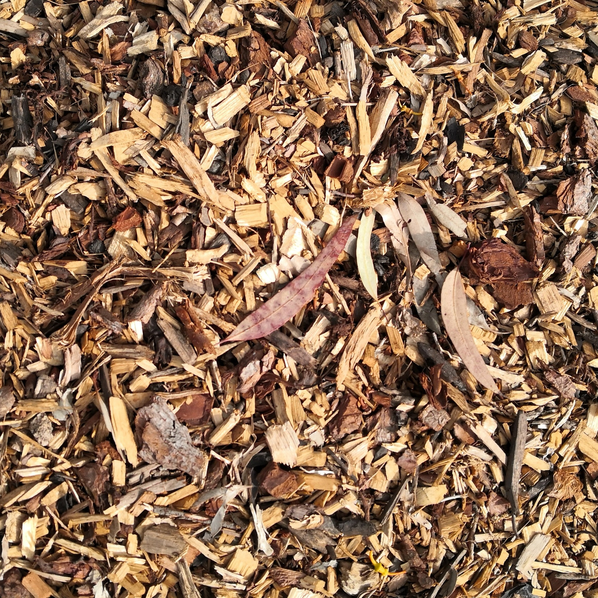 Fine wood chips