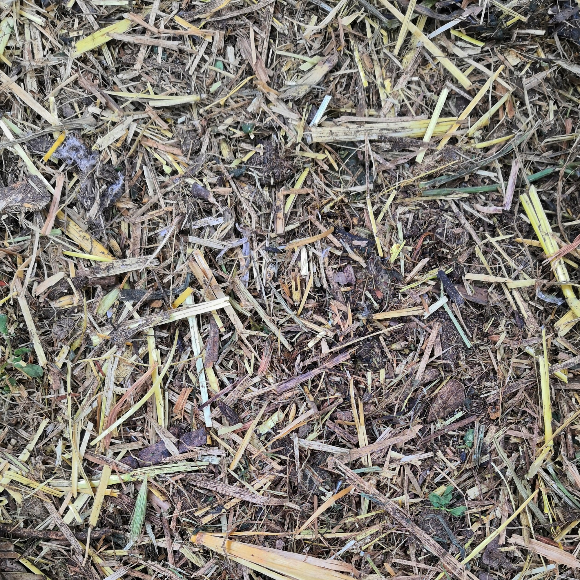 Shredded wood mulch