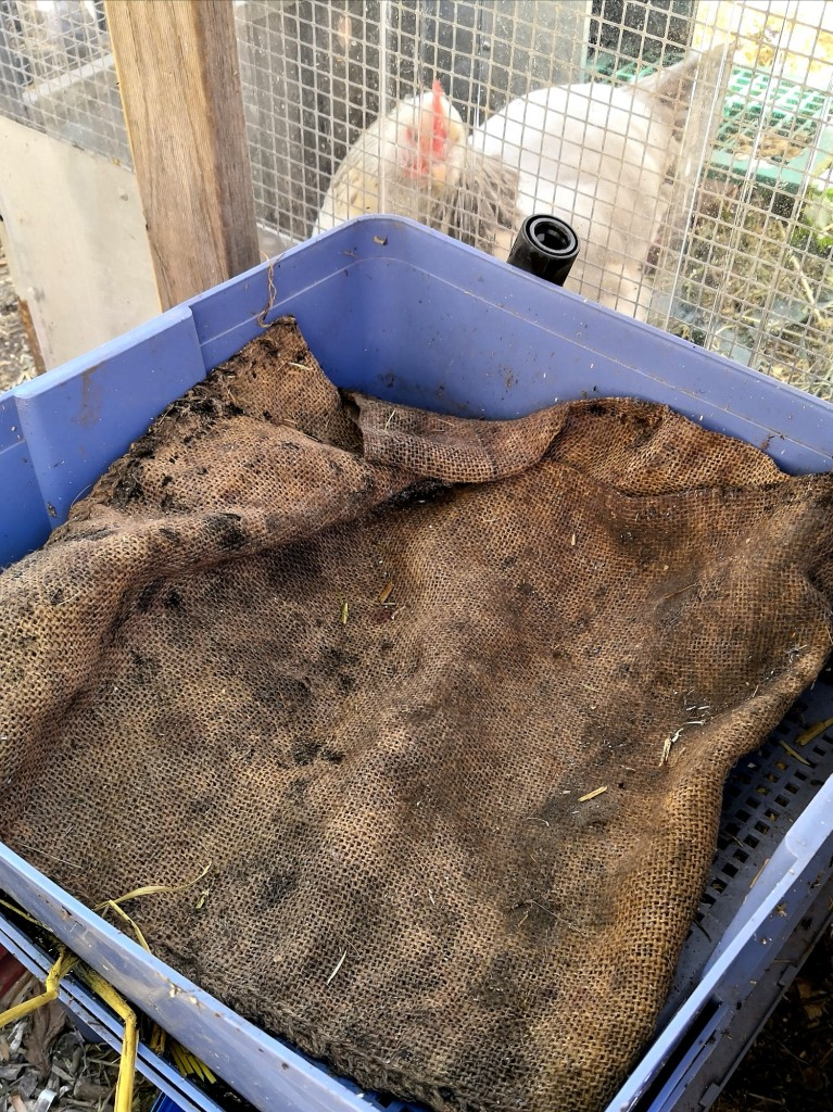 Open weave fabric such as a sack can keep the worms warm.