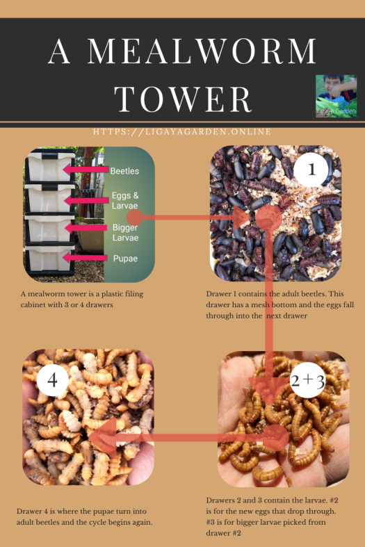 Mealworm Tower fact sheet