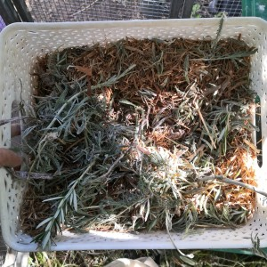 Aromatic herbs in the nesting box keep away bugs.